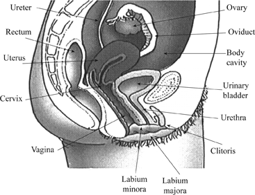 Images of girls sexy organs